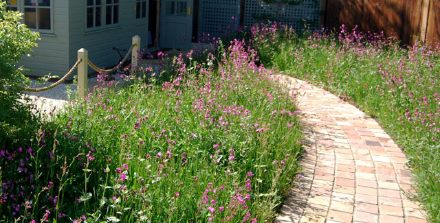Wildflower Turf edging the brick path to a home studio